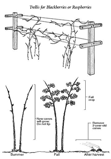 planting tutorial