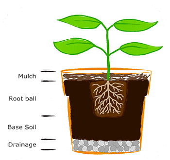 Potting Instructions for Indoor Growth