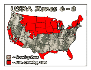 medicinal weeping willow trees USDA Growing Zones