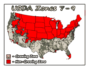 Prepper Scuppernong Vines USDA Growing Zones