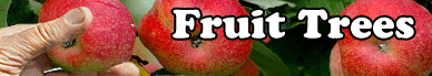 Buy Fruit Tree