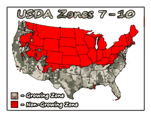 Loquat Trees USDA Growing Zones