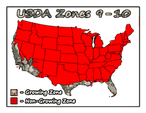 Southern Peach Tree Bundle USDA Growing Zones